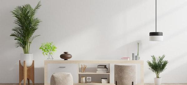 Lebih Estetik! Ini 7 Rekomendasi Tanaman Pembersih Udara Dalam Rumah